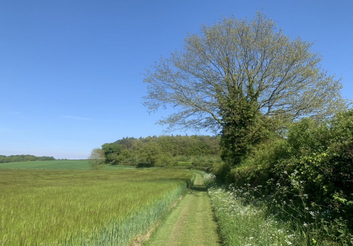 Two Field Walk near Wood Farm Cottages, Norfolk