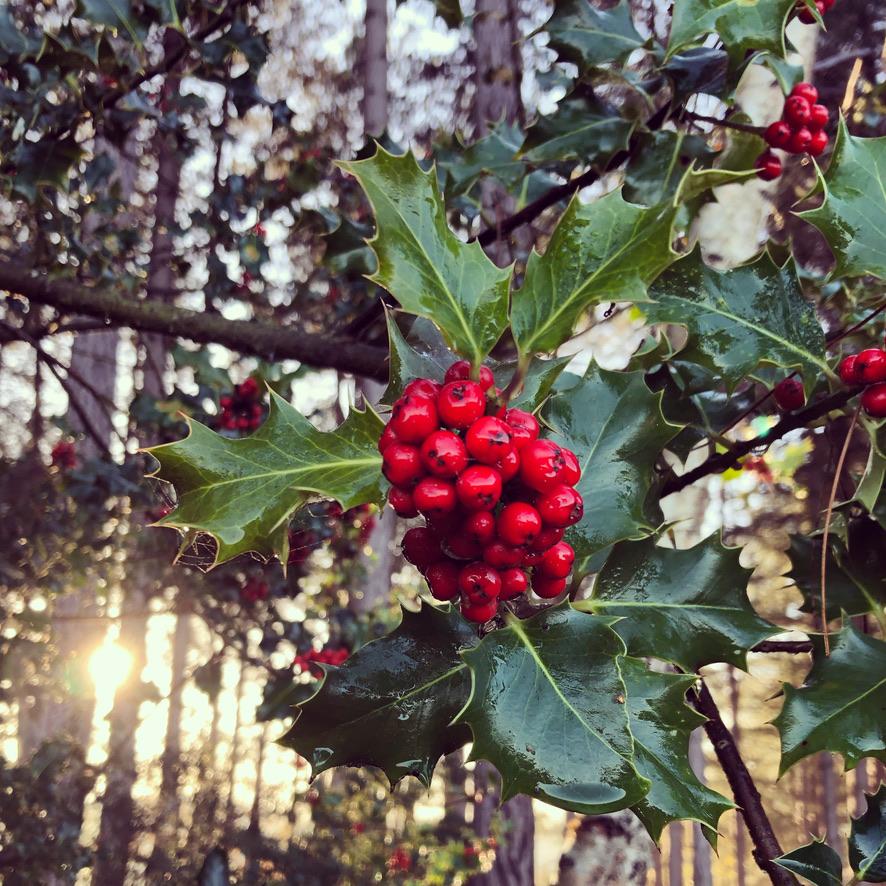 Christmas breaks near Holt in North Norfolk